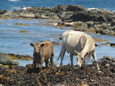 All you need to know about exploring King Island has been covered by bloggers justalittlefurther
