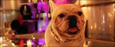 Frenchie is the stout and ever so adorable sidekick of proprietor, Jean-Charles Boisset. It was Frenchie's vision to one day have a winery where all of his furry friends could come play with him that brought this architectural piece of art to life.