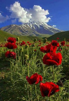 Mount Damavand, the highest peak in Iran