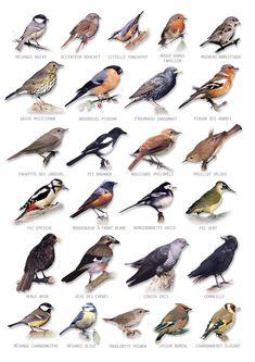 Vente Carte Postale oiseaux - Achat Nature
