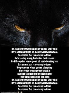 basement cat on pinterest basement cat black cats and funny cat