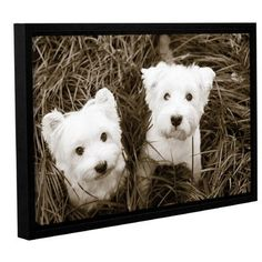 Red Barrel Studio 'Such Cuties' by Jim Dratfield Framed Photographic Print on Wrapped Canvas Size: