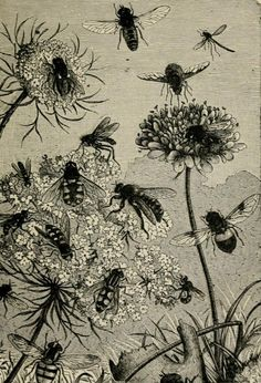 Wild bees and flowers. Illustration from 'About Bees' by Rev. F. G. Jenyns