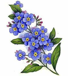 Details about Forget Me Not Flower Select-A-Size Waterslide .- Details about Forget Me Not Flower Select-A-Size Waterslide Ceramic Decals Bx Forget Me Not Flower Select-A-Size Waterslide Ceramic Decals Bx Watercolor Flowers, Watercolor Paintings, Art Paintings, Plant Drawing, Cute Tattoos, Fabric Painting, Botanical Prints, Flower Patterns, Flower Art