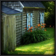 8-24-2014 Hatchet Cove Lilies ~ Took a walk down by Hatchet Cove and came upon this charming cottage by the sea. *** POSTCARDS FROM FRIENDSHIP. A pic a day served fresh daily from Friendship Maine. SuperHumanNaturals.com *** #toothsoap #cure #cankersores
