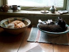 Cats in bowls by Allen Gathman, via Flickr