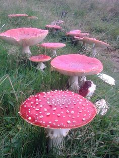 Magical mushrooms!
