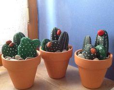 Aprendiendo! Cactus sin mantenimiento!