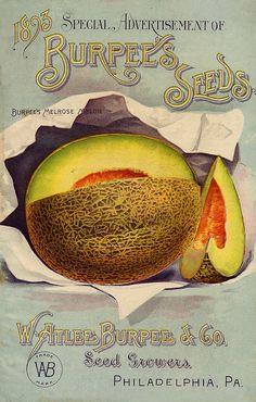 Burpee's Seeds, 1893. #Victorian #seed_catalogs #vintage