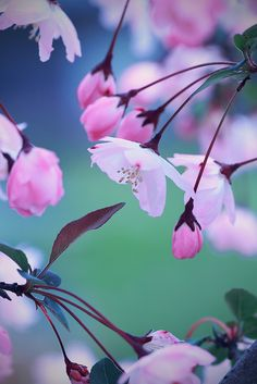 sakura by by mizuk@*