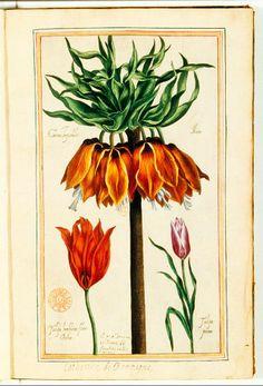 """Illustration de """"le jardin du très chrestien Henri IV"""" - 1608 - bibliothèque Nationale de France Paris"""
