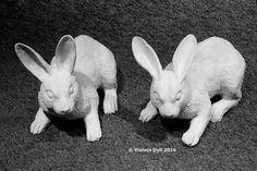 Conigli , arredamento urbano .