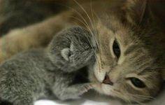 animal  photo pins | Wild Animal celebrities baby animals zone Animals Pictures animal Cute ...