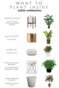 Take the guess out of what to plant iside! Sharing a Stylish Plant + Planter com. Take the guess out of what to plant iside! Sharing a Stylish Plant + Planter combinations. Modern Oh So Stylish Planters — Chic Little House. Plantas Indoor, Gold Planter, Decoration Plante, Jade Plants, Green Plants, Citrus Trees, Modern Planters, Modern Patio, Garden Modern