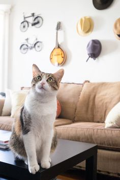 hang anything you like on the wall:) and the cat will make the room purrfect:)