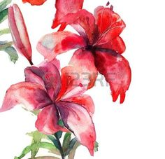 Beautiful Lily flowers, watercolor illustration photo