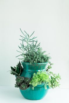 How to Rehab Succulents with Carmen Johnston Gardens