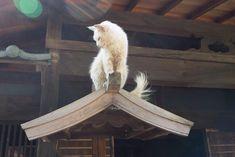 神々しい猫