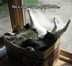 Spare cats <3