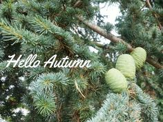Hello Autumn | #Lifestyle POST by Elite Member Not Copper Armour | #lbloggers