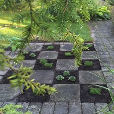 Purple Area: Schackrutor i trädgården