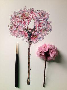 NewPix.ru - Иллюстрации цветов от Noel Badges Pugh