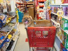 Pet Costs: 21 Clever Ways To Save Money On Everyday Dog Care - wow, EXCELLENT ideas for saving money when you have a dog: vet care, toys, grooming, dog food, pet supplies, and MUCH more!