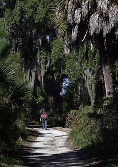 A hiker explores a tree-covered trail at Boyd Hill Nature Preserve in St. Petersburg.