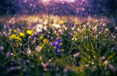 purple dream by Nikoletta Kolozs