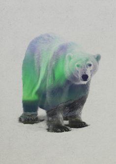 Polar Bear In The Aurora Borealis Art Print