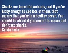 Sharks are beautiful animals, and if you're lucky enough to see lots of them, that means that you're in a healthy ocean. You should be afraid if you are in the ocean and don't see sharks. Like Quotes, Funny Quotes, Harvey Fierstein, Brainy Quotes, Save Our Oceans, Ocean Quotes, Marine Biology, Power Of Prayer, Ocean Life