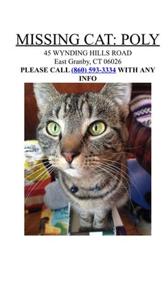 Connecticut Cat Connection August 5 · #Lost #Cat #Tabby #Female #EastGranby #CT  https://www.facebook.com/sara.j.plante/posts/10155910762600230?pnref=story