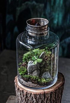 Today we look at ways to make your very own unforgettable bonsai terrarium plants. The picture Bonsai Terrarium plant here offers you a sense of the scale, and we're sure you want to have it for your home decor. Mini Terrarium, Terrarium Cactus, Terrariums Diy, Water Terrarium, Terrarium Centerpiece, Garden Terrarium, Little Gardens, Small Gardens, Ideas Florero