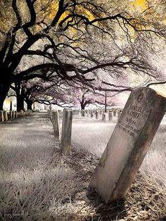 New Orleans Cemetery - Challmette  Battle Field