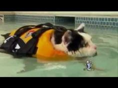 Fat, wet cat makes local news anchor completely lose control of herself on live TV.