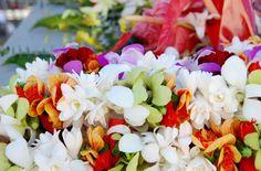 Exotic Flowers, Tropical Flowers, Colorful Flowers, Hawaian Islands, Hawaiian Flowers, Hawaiian Leis, Mahalo Hawaii, Lahaina Maui, Hawaiian Homes