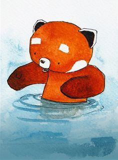 Red Panda in the water - by Ciaran Duffy