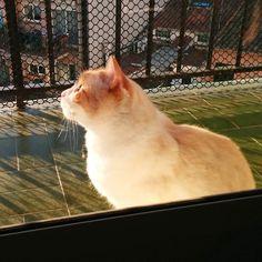 Feliz día internacional del gato!!  #Neko #diainternacionaldelgato #internationaldayofthecat #cats #catstagram #instacats #catsruletheinternet
