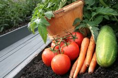 So You Want To Grow A Vegetable Garden? Tips for the Beginner Urban Gardener