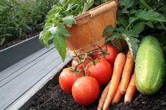Giardinaggio in città, più che una moda. Tra fiori, frutta e ortaggi si scopre il valore sociale degli orti urbani.
