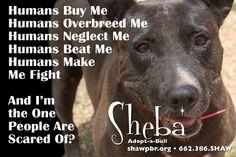 shawpbr.org 662.386.SHAW  #shawpbr #adopt #donate #educate