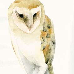 I love watercolor, but there is something amazing about the beautiful simplicity of this Barn Owl Fine Art Print from Original Watercolor by dearpumpernickel