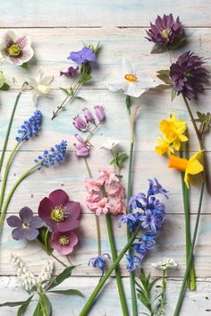Botanical Photography My Garden Treasures A collection of spring blooms gathered from my magical woodland garden including hellebores, daffodils, hyacinth, periwinkle and muscari. Most of these I planted over the years but some grow wild, adding to the beauty each year. Through my work