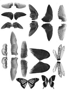 wings images, image search, & inspiration to browse every day. Paper Dolls, Art Dolls, Alas Tattoo, Bird Wings, Insect Wings, Eagle Wings, Insect Art, Foto Art, Printable Art