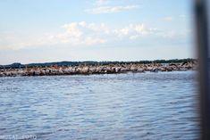 20451716_1456377567784139_3761586148427342401_o Danube Delta, Boat Tours, Bird Watching, Landscape, Beach, Water, Outdoor, Gripe Water, Outdoors