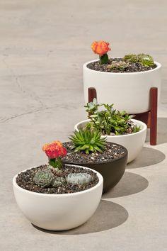 Modernica Case Study Ceramic Plant pots