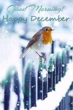 Good Morning Happy December More Le 3 décembre it snow ! Pretty Birds, Love Birds, Beautiful Birds, Animals Beautiful, Cute Animals, Animals Tattoo, Happy December, Hello January, Hello December Quotes