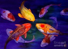 Browse through images in Robert Hooper's KOI collection. Watercolor originals of koi fish Watercolor Fish, Watercolor Images, Watercolor Paintings, Koi Painting, Fish Paintings, Koi Art, Fish Art, Koi Kunst, Japanese Koi