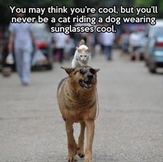 The Definition of Cool. Funny cat picture with a cat riding a dog wearing sunglasses.