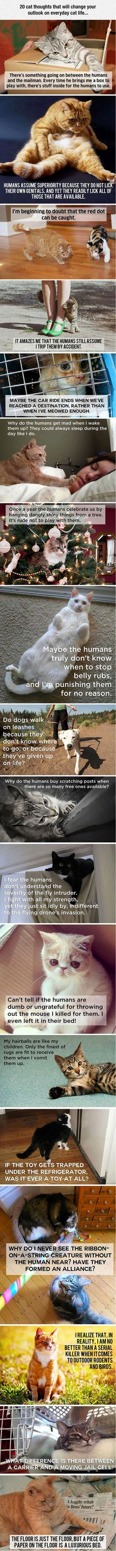 What cats are really thinking...